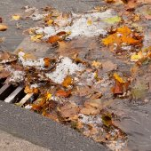 leaves clogging a storm drain with water pooling around it