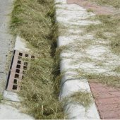 grass clippings covering a storm drain