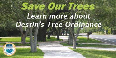 Website Highlight Tree Ord